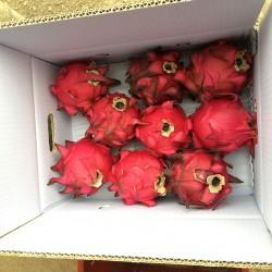 紅龍果中顆10斤(季節限定)