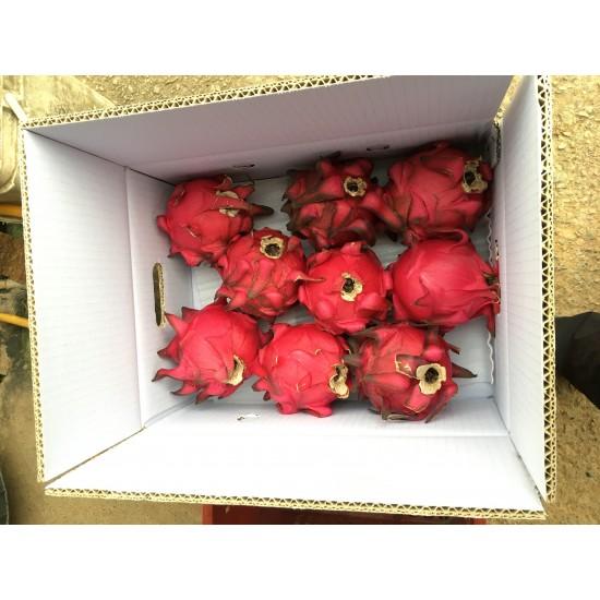 紅龍果大顆10斤(季節限定)